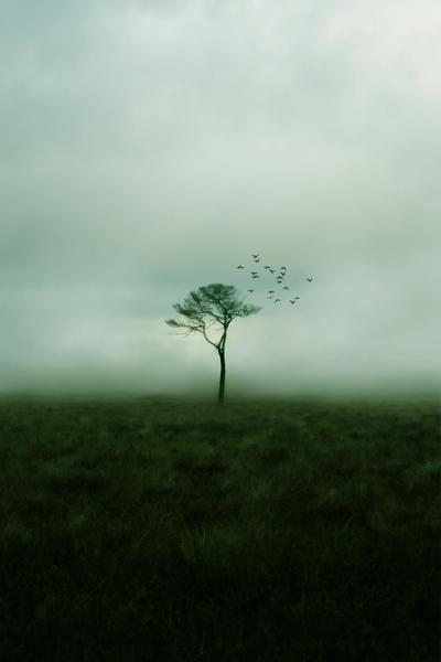 Like Emptiness.