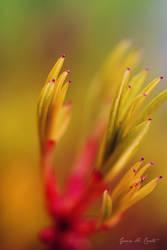 Photos from a Spring Garden: I