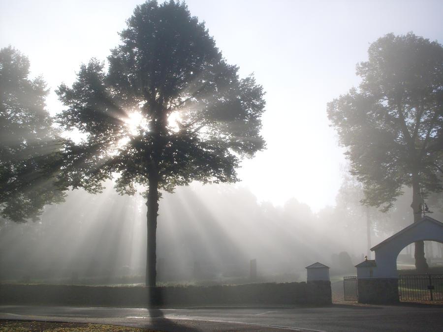 Misty Graveyard South Devon | It took until about mid aftern… | Flickr