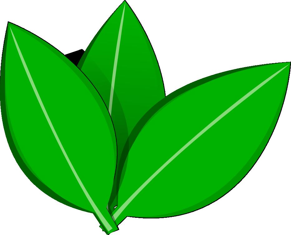 Leaf Vector Png 52059  RAMWEB