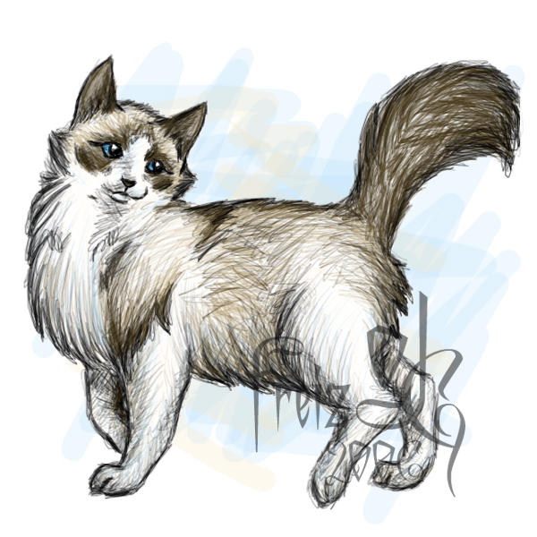 Rag Dolls Drawing Ragdoll Cat by Freizizania on