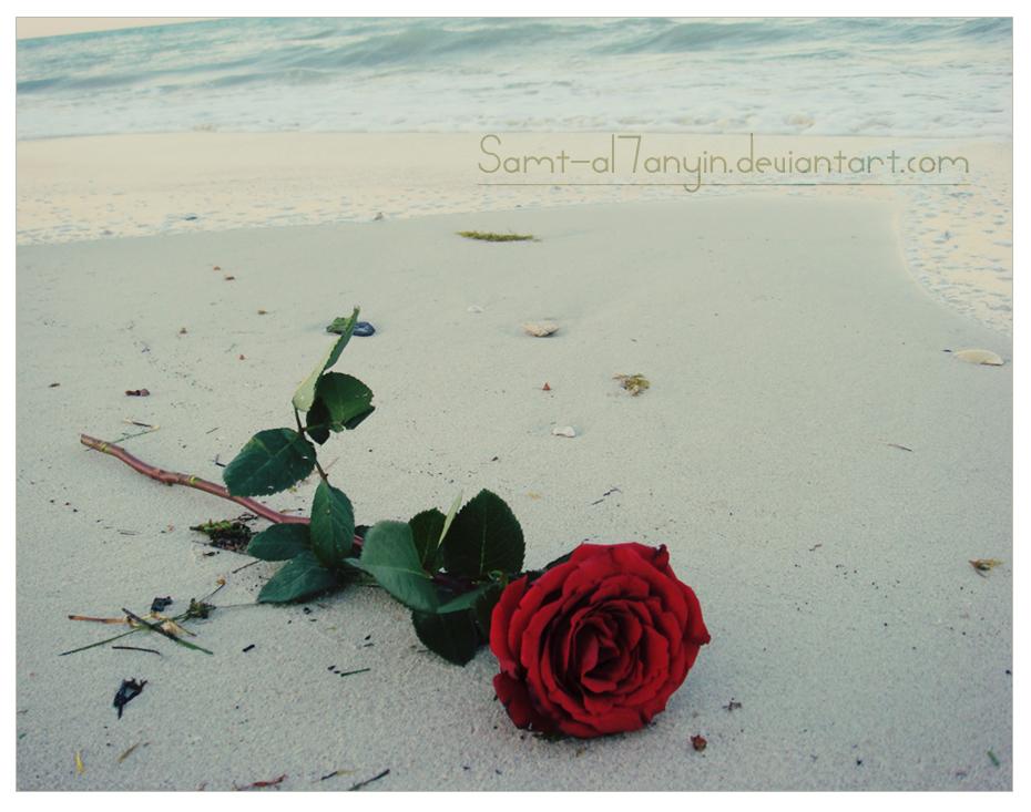 Lonely Rose    I by Samt al7anyin