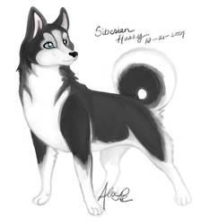 Poll Dogs - Siberian Husky