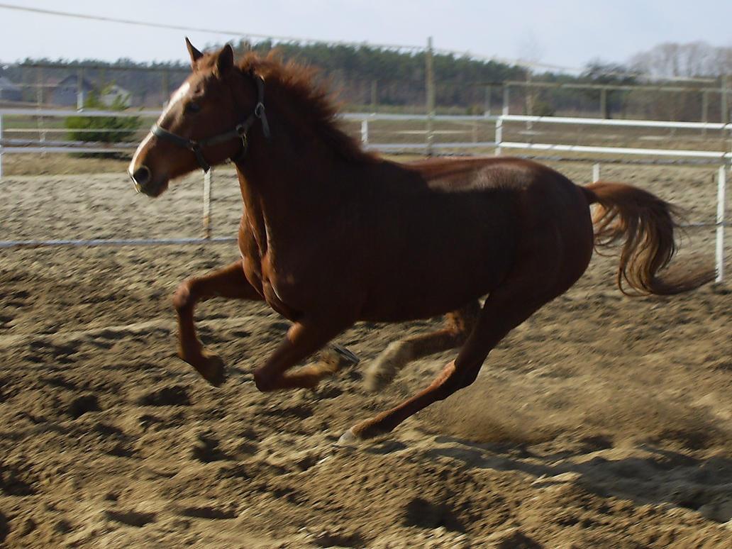 Bielka III by Narsil-horse