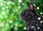 bunny, digital painting by LeontinevanVliet