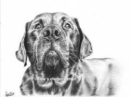 Labrador portrait by LeontinevanVliet