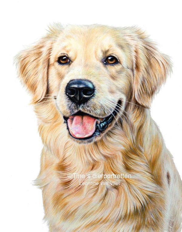 'Hente' colored pencil portrait