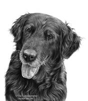Sascha - Commissioned portrait drawing by LeontinevanVliet