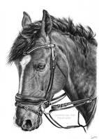Horse portrait drawing by LeontinevanVliet