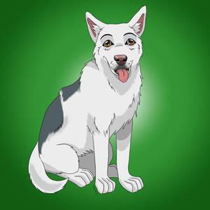 Dog called Grey