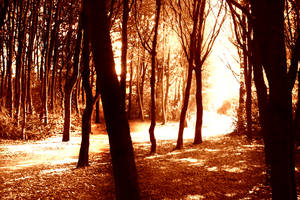 Sunlight through the forest