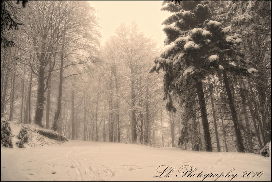 snow dreams of winter III by Lk-Photography