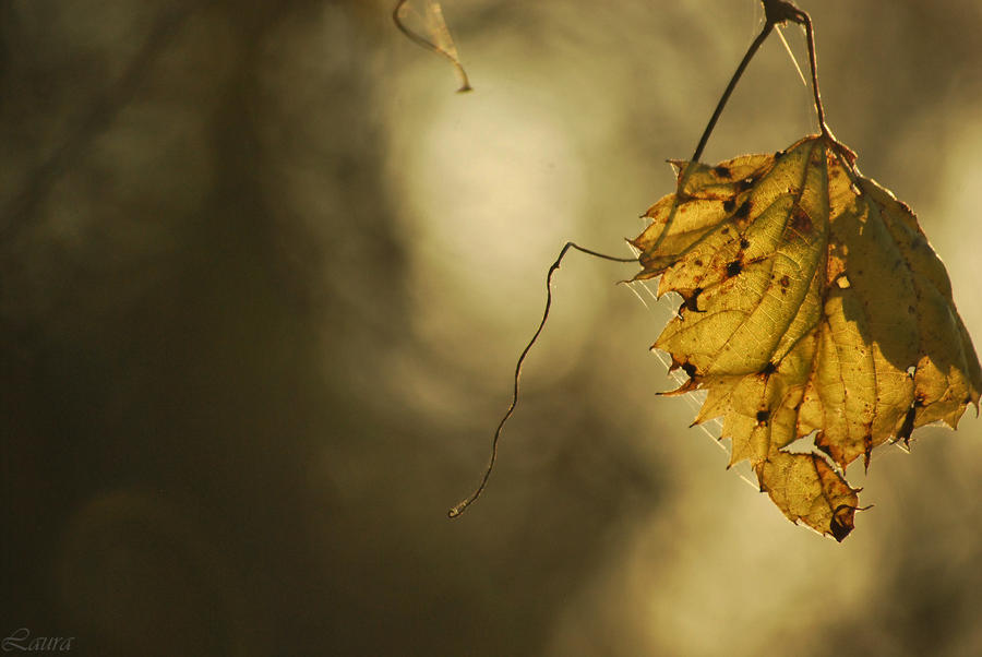 alone in autumn - bless I by Lk-Photography