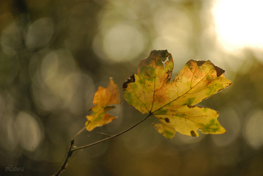 alone in autumn - bless II by Lk-Photography