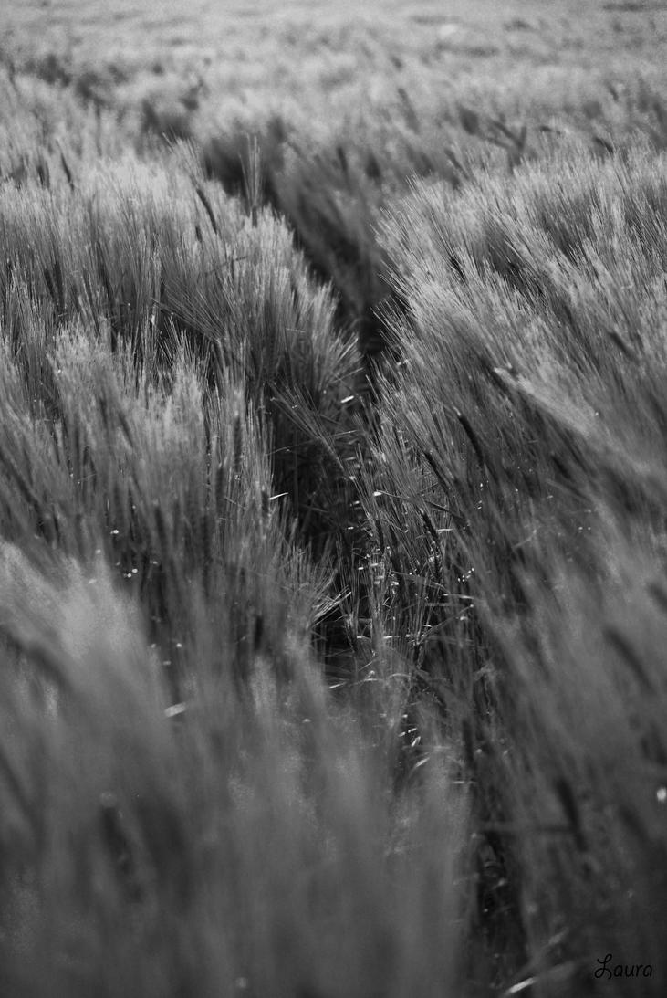 path -  summer shades II by Lk-Photography