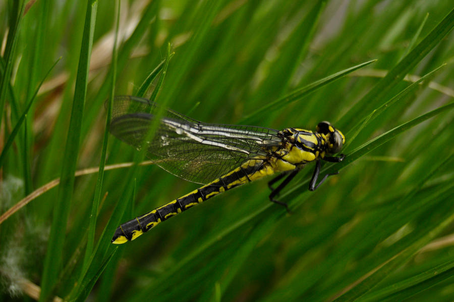 Spring friends - dragonfly II by Lk-Photography