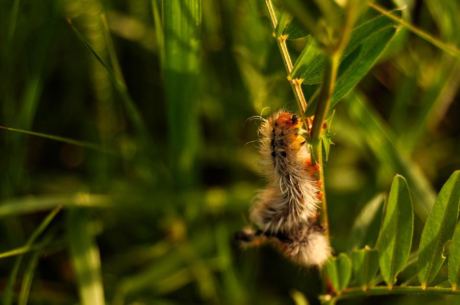 spring friends - caterpillar by Lk-Photography
