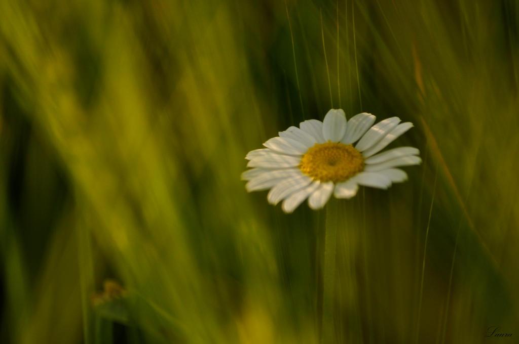 hidden flower by Lk-Photography