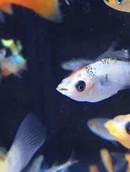 Fishi  by DrawCatish