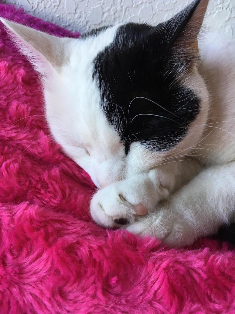 Cat sleeping by DrawCatish