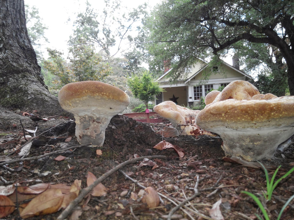 shrooms unmodified  by intouch