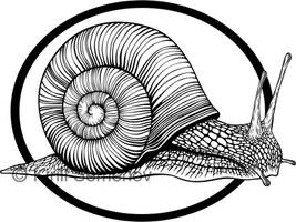 Snail by Skirill