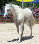 Andalusian 3