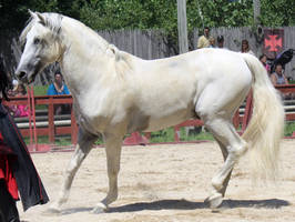Andalusian 5 by roar-shack-stock