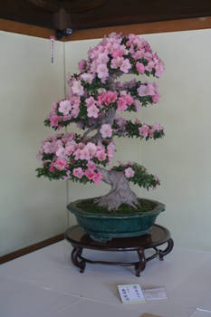 Bonsai Tree 4