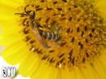 Sunflower Bee par Allison Christine Martines