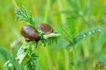 Brown Slug par Allison Christine Martines