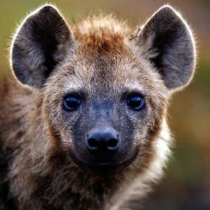 hyenaskate's Profile Picture