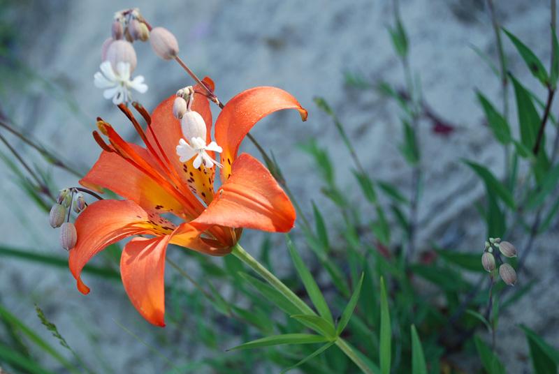 Flower. by pierreblake