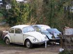 Junkyard Beetles