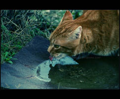 J'ai un peu soif by Xx-Channel-xX