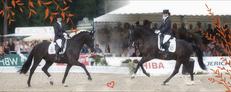 Blend horses by Tumbling-Star