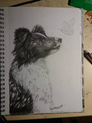 Graphite Collie  study by Deep6Howl