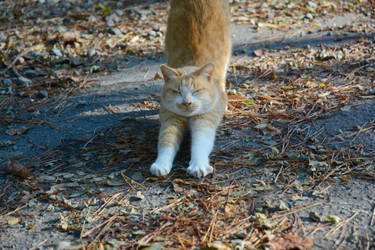 Cat by iiyamaline