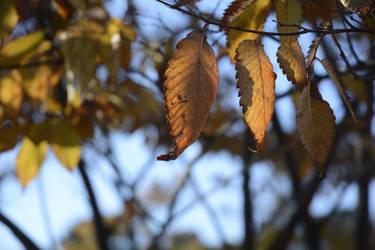 Autumn Leaves by iiyamaline