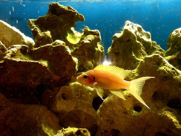another fish by killerkrabbe