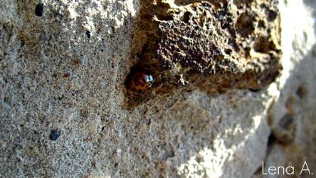 Ladybug by LenaRainbow
