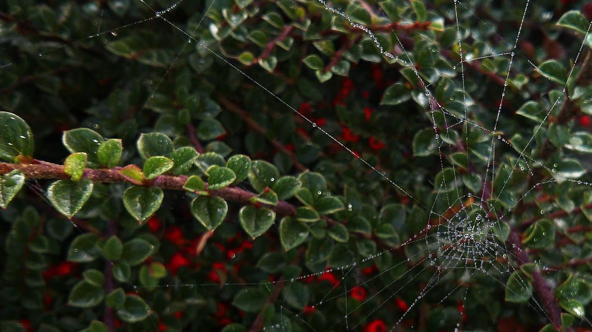 Cobweb III WALLPAPER