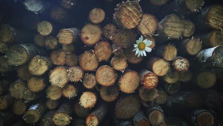 Lost Flower Wallpaper