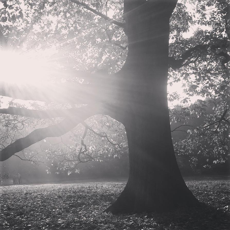 Sunny autumn by giovannniii
