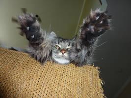 Super Cat by Cactuar333