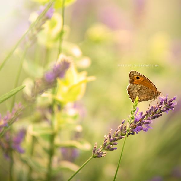 Lavender Love by S-Patriot