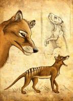 Thylacine by Culpeo-Fox