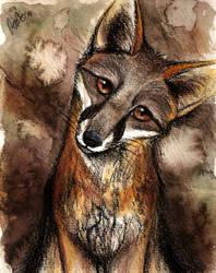 Gray Fox by Culpeo-Fox
