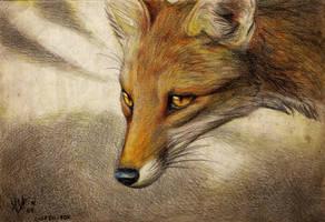 Culpaeus by Culpeo-Fox