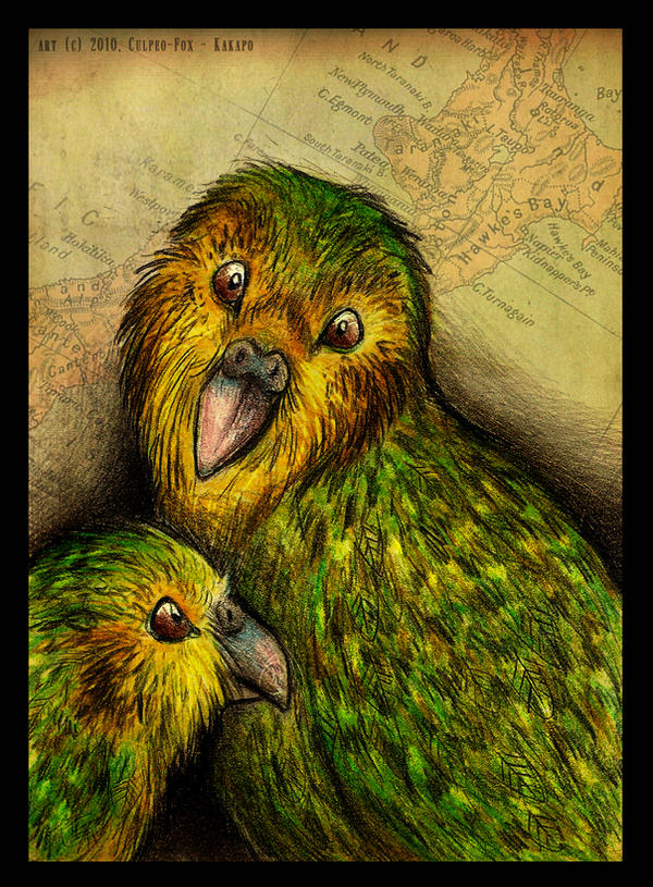 Kakapo by Culpeo-Fox on DeviantArt